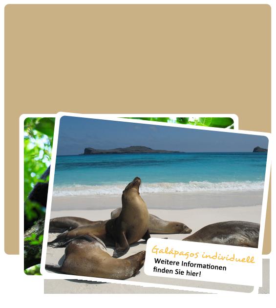 Ihre individuelle Galapagos Reise unverbindlich anfragen!